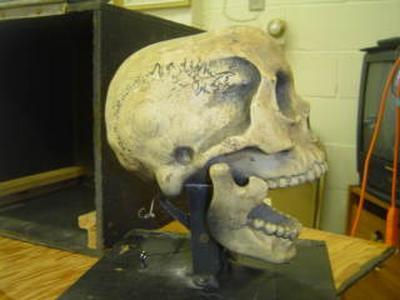 mcelroy skull 002
